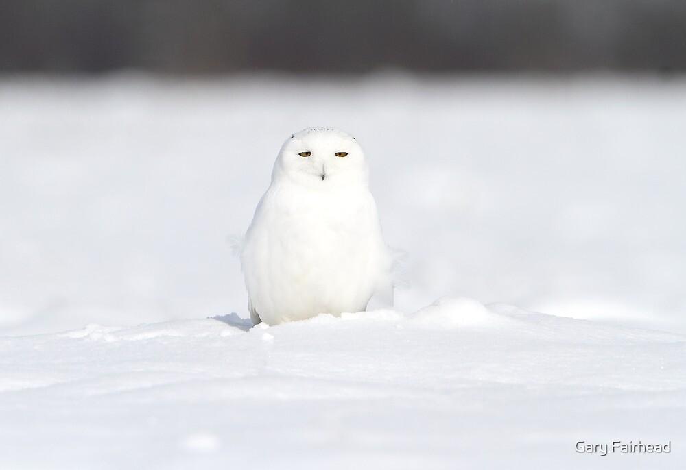 A Whiter Shade Of Pale by Gary Fairhead