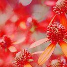 Summer Garden by cshphotos