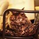 Sleepy kitty by Lynn Starner