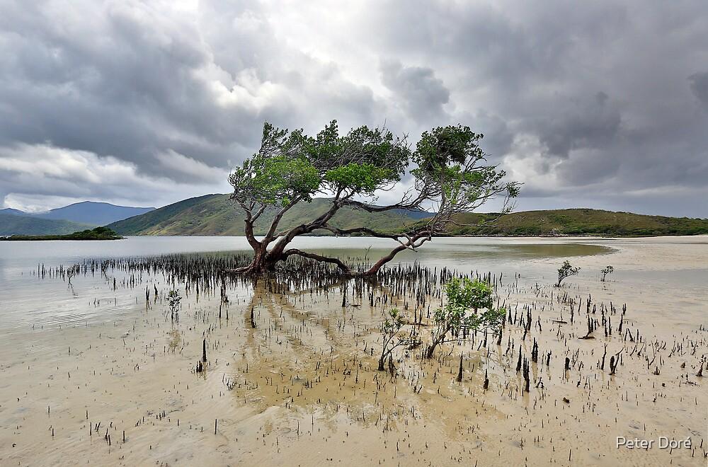 Mangrove Tree by Peter Doré