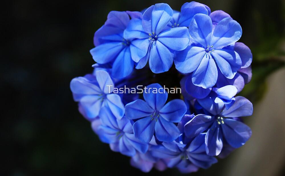 Flower by TashaStrachan