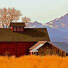 Longs Peak Red Barn by Luann wilslef