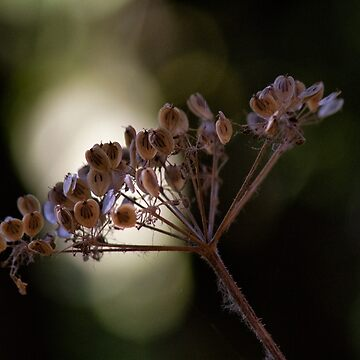 Plant in the Light by DaleCody