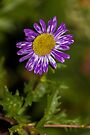 Purple Rays by John Velocci