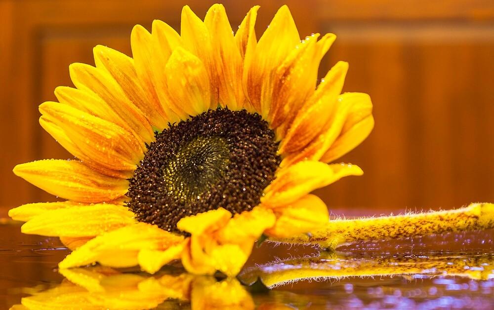 Sunflower 7 by John Velocci