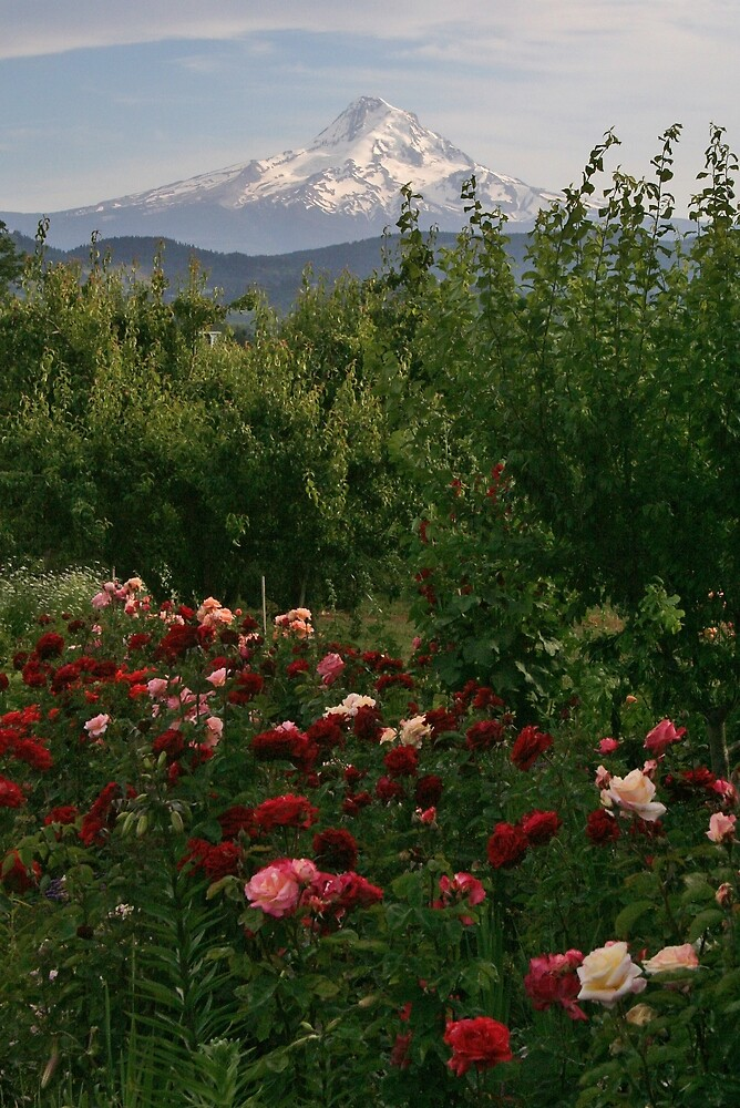 Mt Hood with Roses by Randy Richards