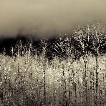 November by ajlphotography