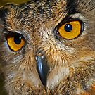 Are you looking at me? by Sarah Williams