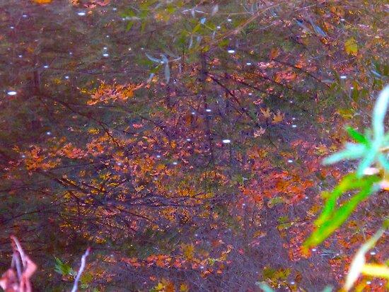Autumn under water by MarianBendeth