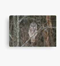 Great Great Owl - Ottawa, Canada Canvas Print
