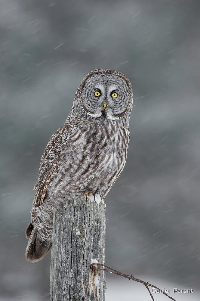 Waiting out the Storm by Daniel  Parent