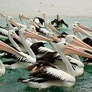 Pelicans by Antonia  Valentine