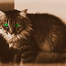 Cindypuss in Sepia by TeAnne