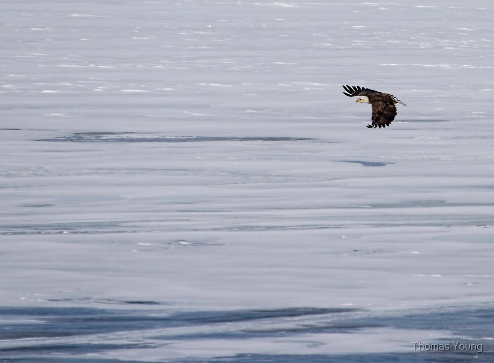 Soaring Over The Ice by Thomas Young