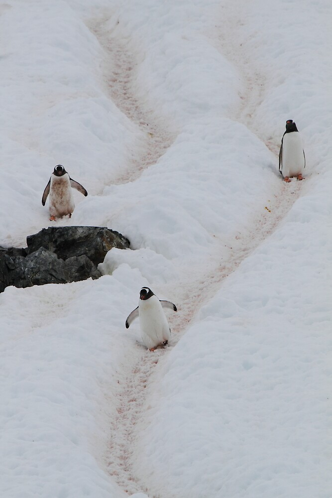 Penguin Highway by DianaC