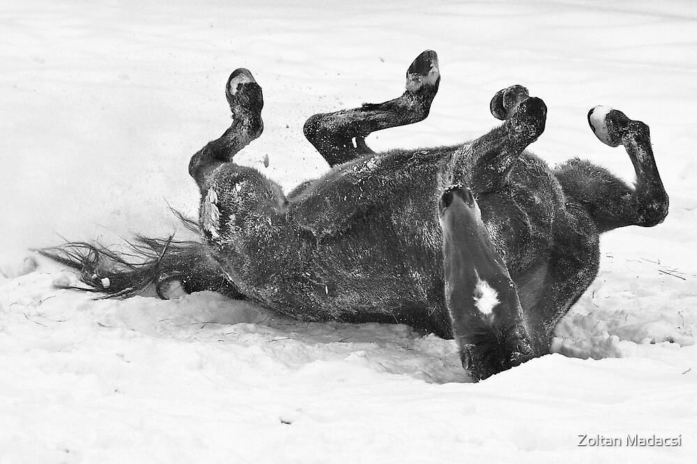 Snow-Bath by Zoltan Madacsi