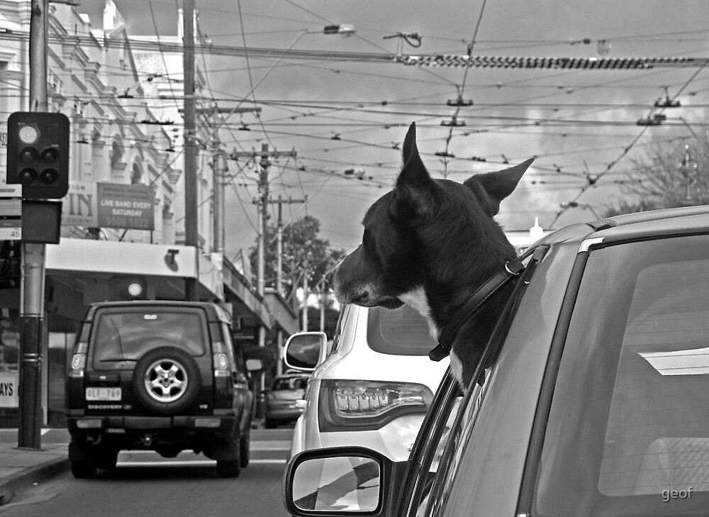 Afternoon traffic reports on WOOF- FM.  by geof
