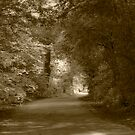 Country Lane by Andy Smith