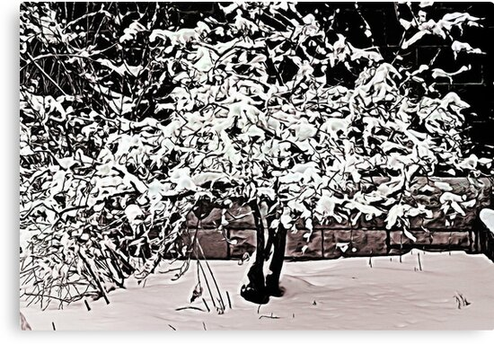 Snow Tree © by Dawn Becker
