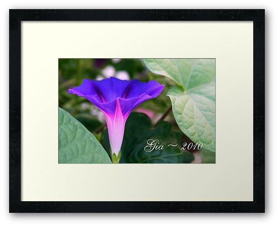 """The Glory of the Morning Glory"" by Gail Jones"