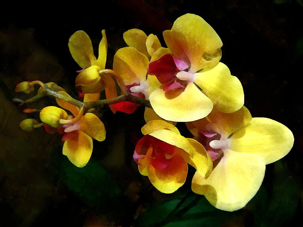 Yellow Orchids Shadow and Light by Susan Savad