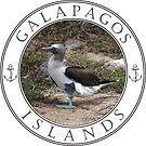 Galapagos Island Blue Footed Booby by vgbg