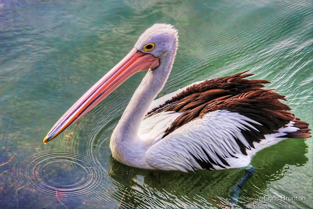 Pelican circle by Chris Brunton