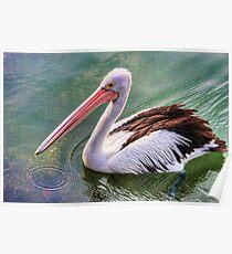 Pelican circle Poster