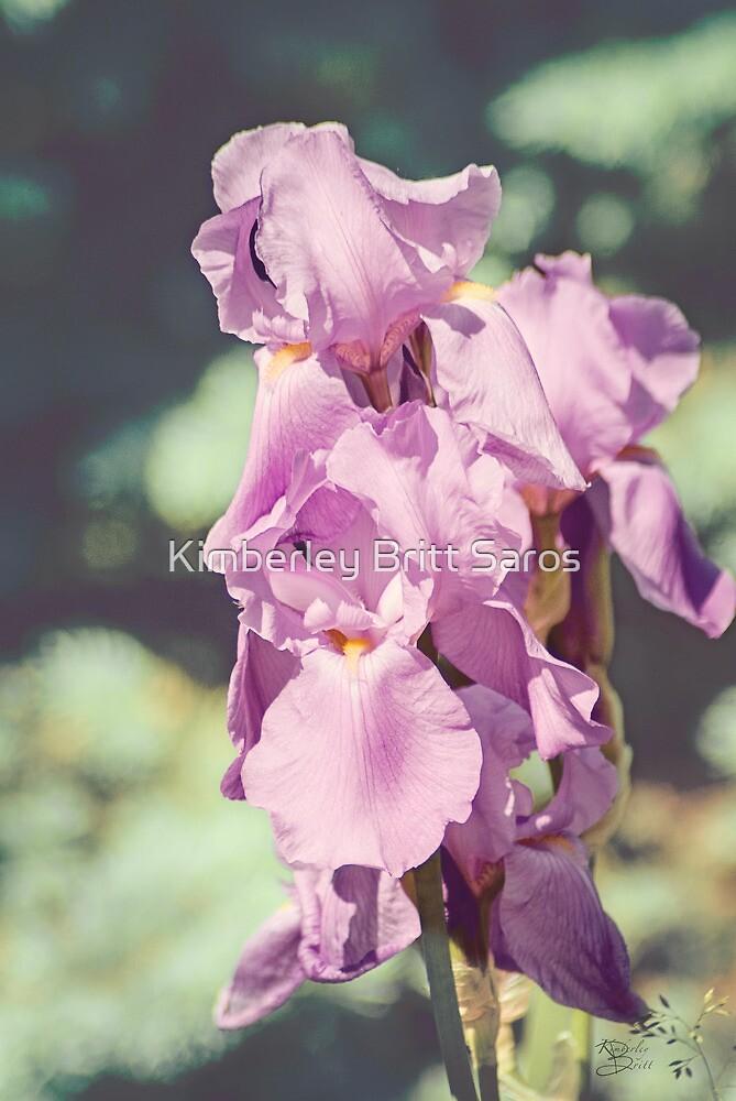 Spring Splendor by KBritt