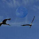 moon by Antanas