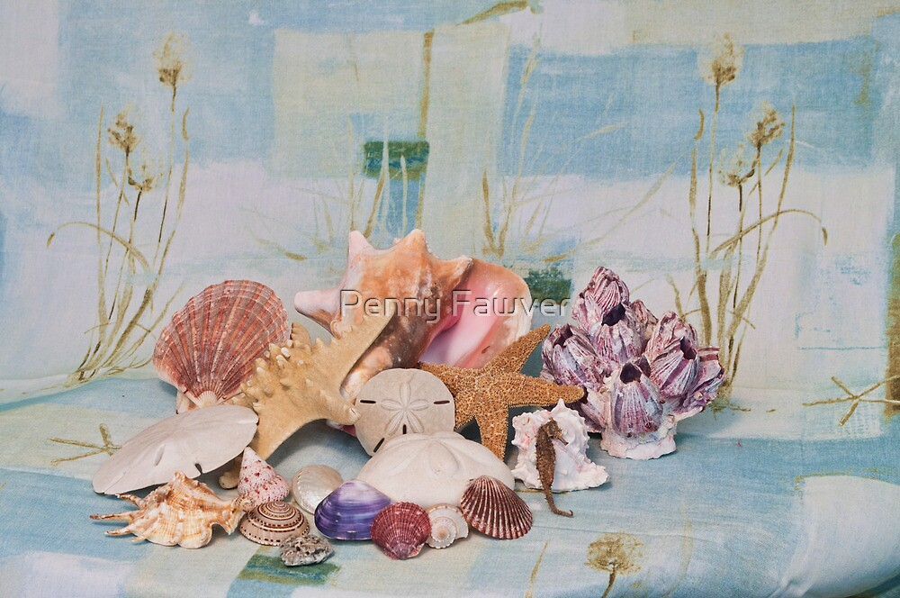 shells still life by Penny Fawver