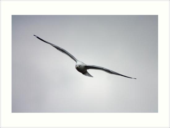 Seagull 1 by Daniel Owens