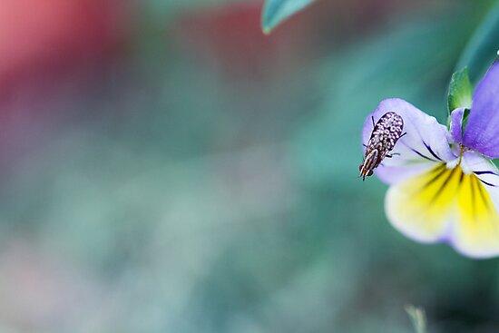 Mottled Wings by Josie Eldred