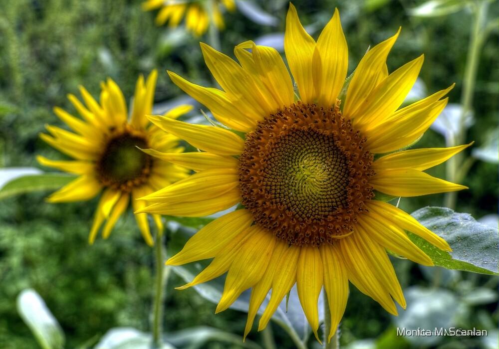 The Sunflower by Monica M. Scanlan