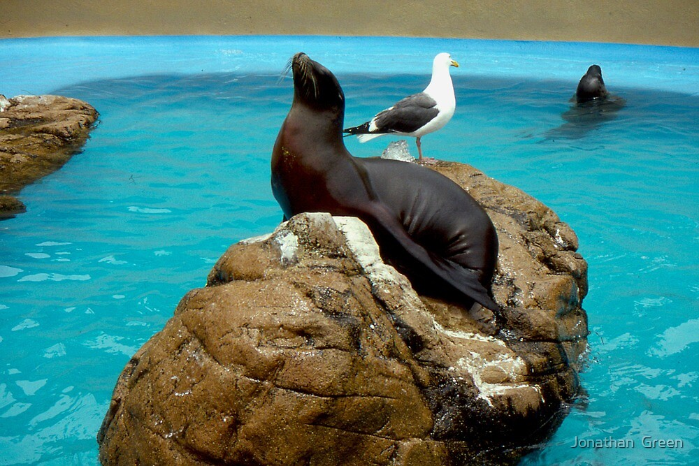 SealGull  by Jonathan  Green