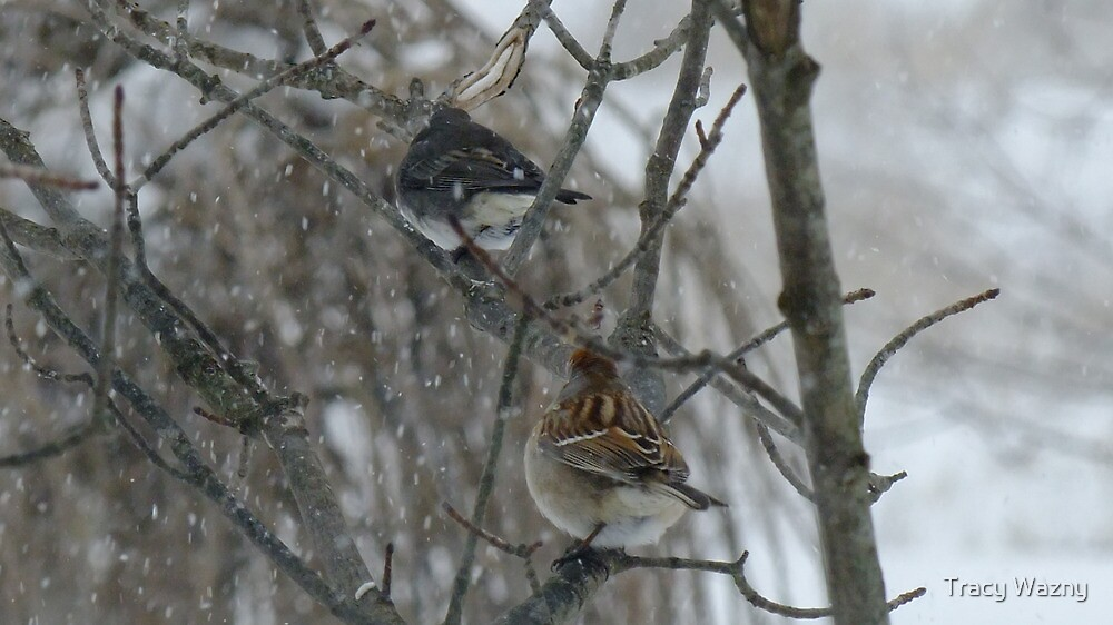 The Junco and The Sparrow In The Snow by Tracy Wazny
