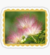 Mimosa ~  An Exotic Flowering Tree Sticker