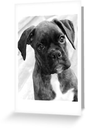 My baby boy in black and white by Jeanette Muhr