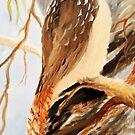 kookaburra one of tryptage set by Glen Johnson