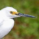 Snowy egret profile by jozi1