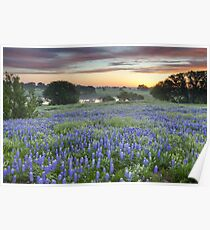 Bluebonnet Field Sunset in the Texas Hill Country Poster