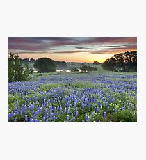 Bluebonnet Field Sunset in the Texas Hill Country Photographic Print