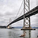 Bay Bridge with Gull by James Watkins