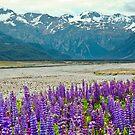 Arthur's Pass, New Zealand by Dilshara Hill