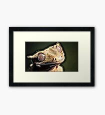 Wild nature - reptile Framed Print