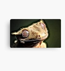 Wild nature - reptile Canvas Print