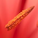 A touch of macro by Penny Fawver