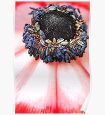 Red Anemone....(IV) Poster