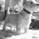 Westie in the Snow by tommo1192