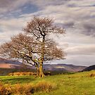 Tree Against Mountains by Great North Views
